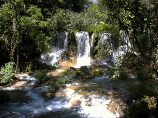 Selva Lacandona: flora y fauna