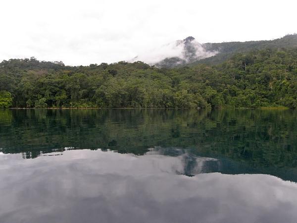 Selva Lacandona: flora y fauna - Selva Lacandona: ubicación y características