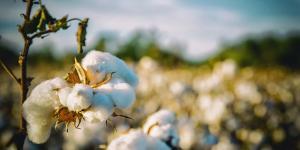 Cuánto tarda en degradarse el algodón