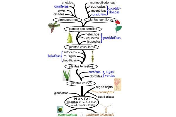 Origen y evolución de las plantas: resumen - Resumen de la evolución de las plantas