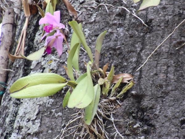 Plantas epífitas: qué son, tipos y ejemplos