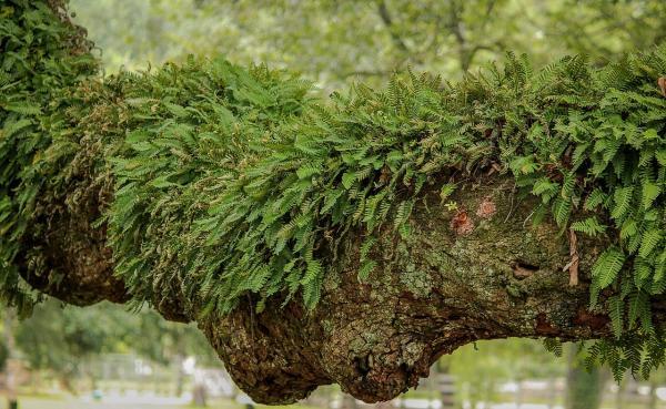 Plantas epífitas: qué son, tipos y ejemplos - Qué son las plantas epífitas: definición