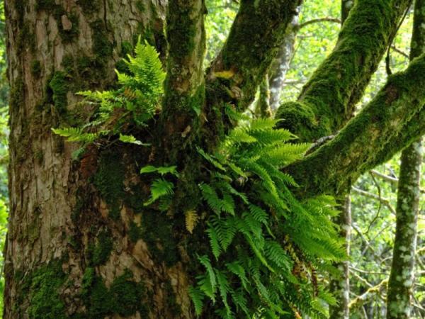 Plantas epífitas: qué son, tipos y ejemplos - Tipos de plantas epífitas y ejemplos de especies