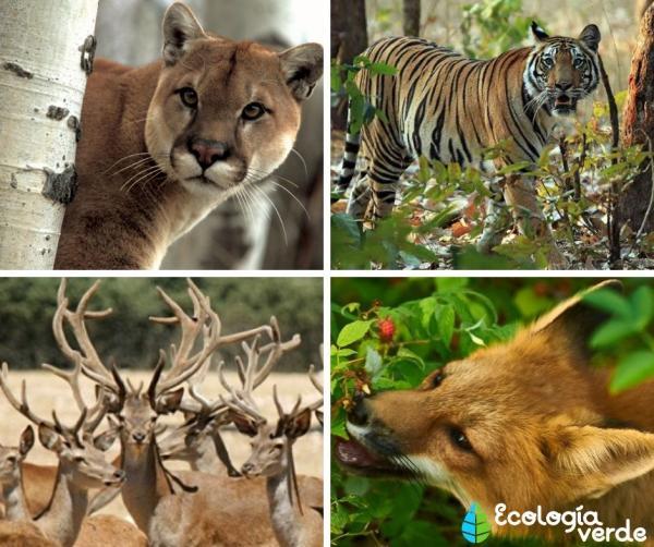 Bosque mixto: características, flora y fauna - Fauna del bosque mixto