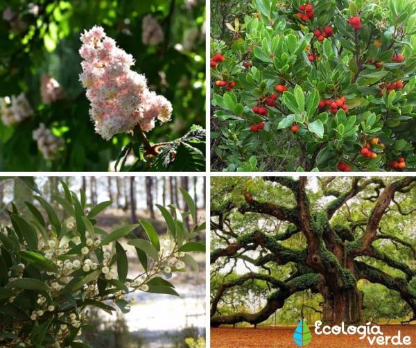 Bosque mixto: características, flora y fauna - Flora del bosque mixto
