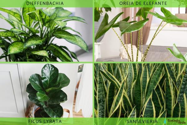 Plantas verdes de interior - Listado de plantas verdes de interior