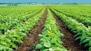 Qué es la agricultura orgánica - Qué es la agricultura orgánica