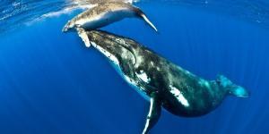 Dónde vive la ballena y qué come