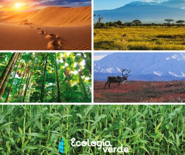Tipos de ecosistemas - Ecosistemas terrestres y sus tipos
