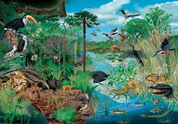 Tipos de ecosistemas - Qué es un ecosistema - definición sencilla