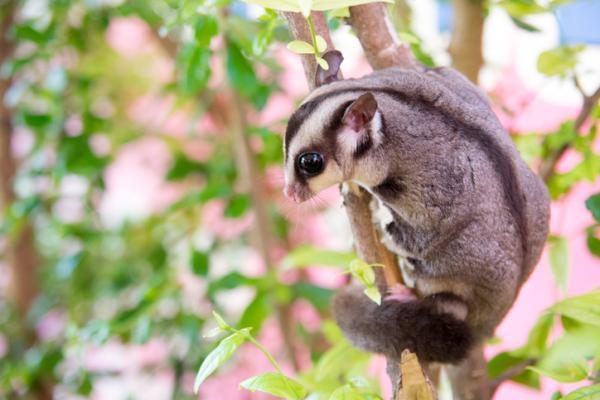 Cuáles son los animales mamíferos voladores - Curiosidades de los animales mamíferos voladores