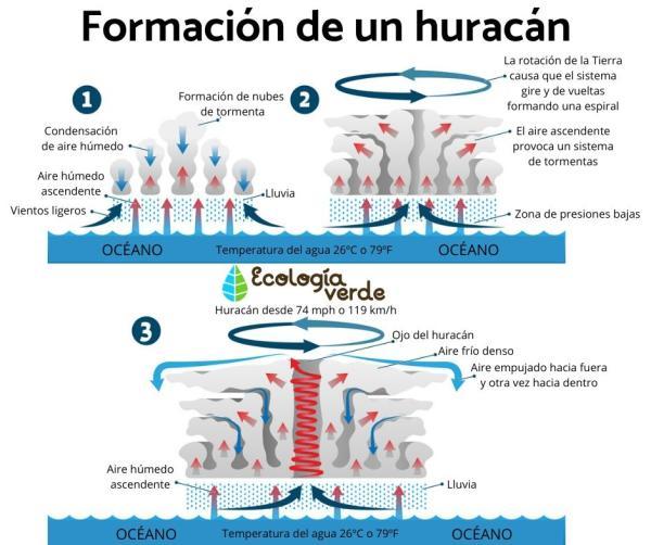 Diferencia entre huracán y tifón - Cómo se forman los huracanes y tifones - proceso