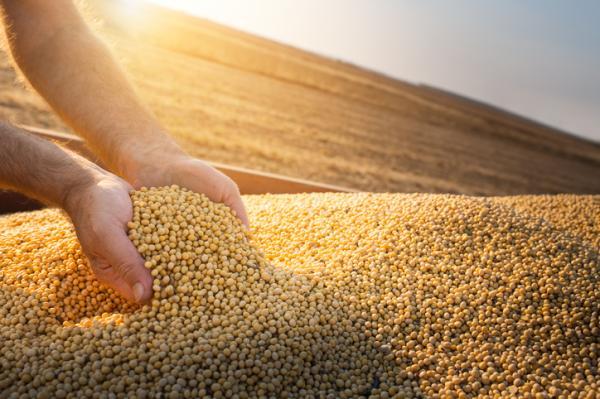 17 Objetivos de Desarrollo Sostenible de la ONU - Objetivo 2. Lucha contra el hambre y mejora de la agricultura sostenible