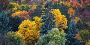 Bosque templado: características, flora y fauna