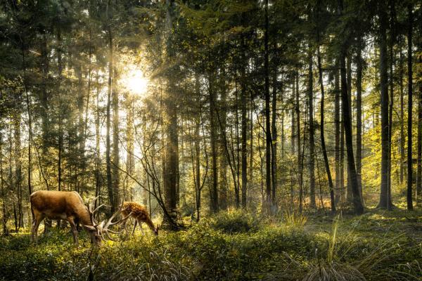 Bosque templado: características, flora y fauna - Fauna del bosque templado