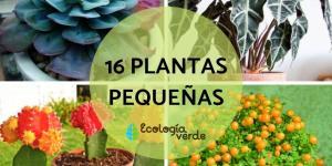 16 plantas pequeñas