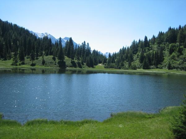Ecosistemas acuáticos de agua dulce: ejemplos - Cuáles son los ecosistemas acuáticos de agua dulce
