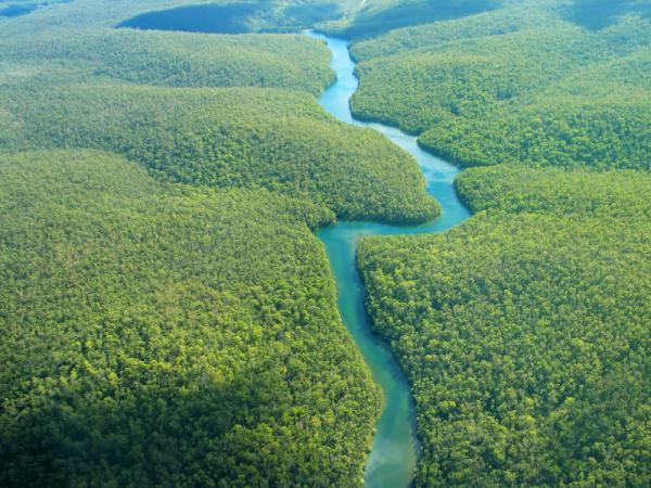 Ecosistemas acuáticos de agua dulce: ejemplos