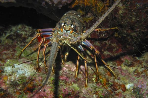 +20 animales con caparazón - El caparazón o concha de los crustáceos