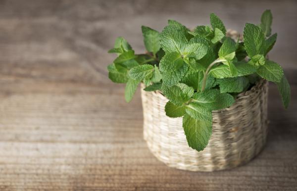 Plantas que absorben la humedad - Menta