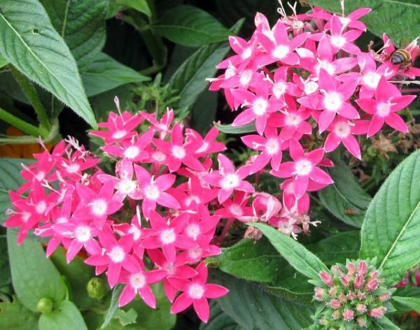 11 plantas que florecen todo el año - La penta