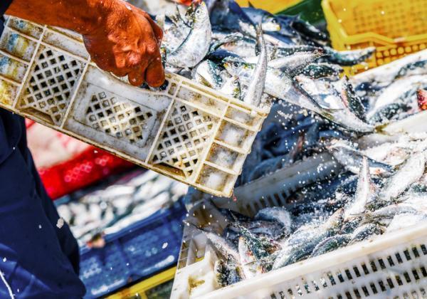 Problemas medioambientales y soluciones - Sobrepesca