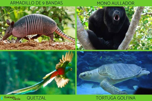 Flora y fauna de Chiapas - Animales en peligro de extinción en Chiapas