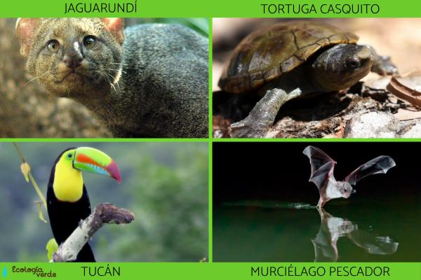 Flora y fauna de Chiapas - Fauna de Chiapas