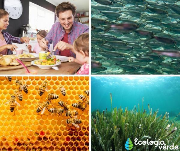 Qué es la ecología de poblaciones o demoecología - Tipos de poblaciones