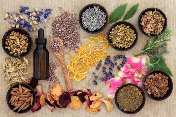 50 plantas medicinales mexicanas y para qué sirven