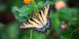 Características de las mariposas: dónde viven, qué comen, tipos y curiosidades