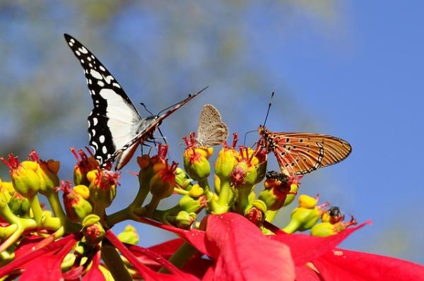 Características de las mariposas: dónde viven, qué comen, tipos y curiosidades - Dónde viven las mariposas