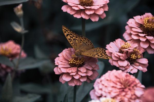 Características de las mariposas: dónde viven, qué comen, tipos y curiosidades - Más curiosidades sobre las mariposas