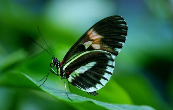 Características de las mariposas: dónde viven, qué comen, tipos y curiosidades - Qué son las mariposas: características principales