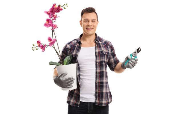 Cómo podar una orquídea - Cuándo podar una orquídea
