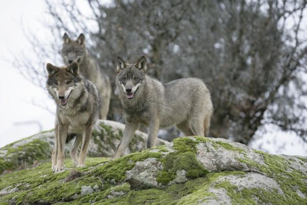 32 animales en peligro de extinción en España