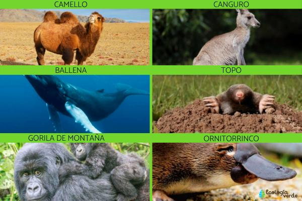 Tipos de mamíferos, sus características y ejemplos