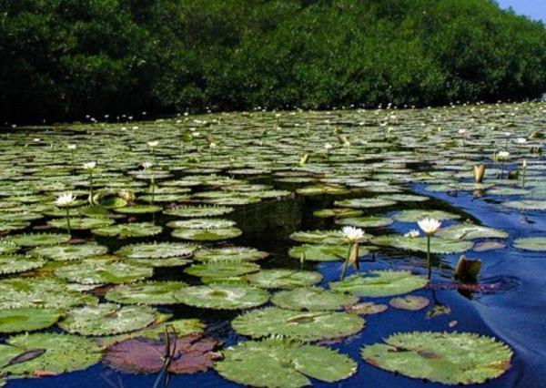 Qué es un ecosistema acuático - Ecosistemas acuáticos de agua dulce