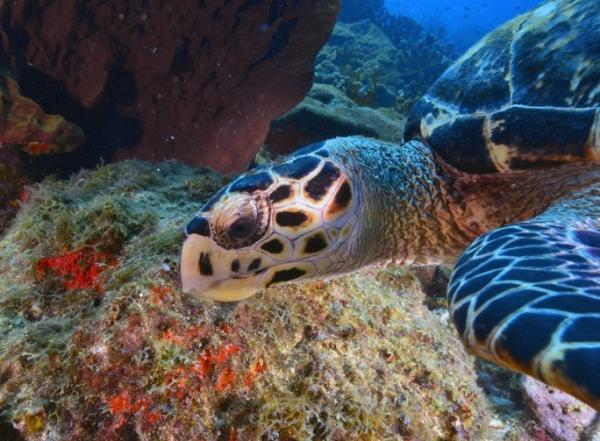 Qué es un ecosistema acuático - Ecosistemas acuáticos marinos o de agua salada