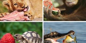 Organismos heterótrofos: qué son, características y ejemplos