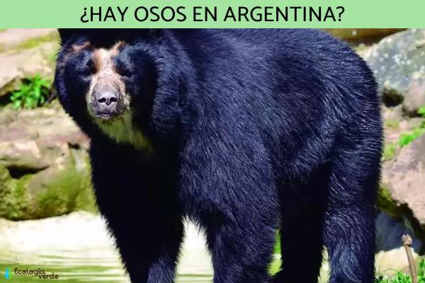 ¿Hay osos en Argentina?