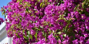 Nombres de plantas trepadoras con flores