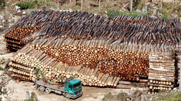 Deforestación en Argentina: causas y consecuencias - Causas de la deforestación en Argentina