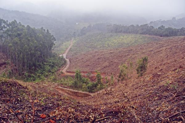 Deforestación en Argentina: causas y consecuencias - Consecuencias de la deforestación en Argentina