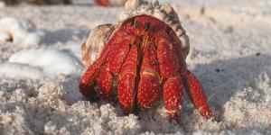 Crustáceos: qué son, tipos, características y ejemplos