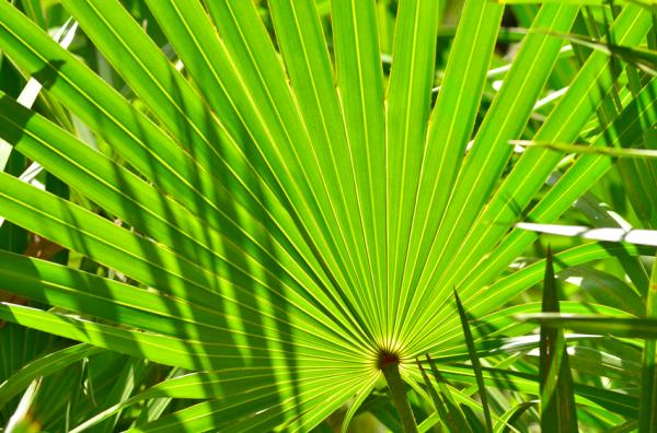 Cuál es la importancia de la humedad atmosférica - Importancia de la humedad para las plantas