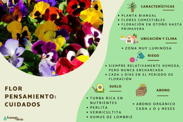 Flor pensamiento: cuidados