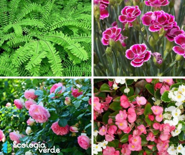 Plantas ornamentales: qué son, tipos, nombres e imágenes - Tipos de plantas ornamentales de exterior - nombres