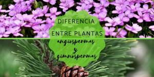Diferencia entre angiospermas y gimnospermas