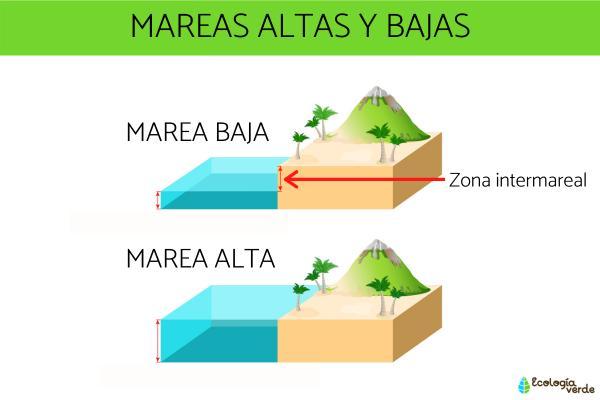 Qué son las mareas y por qué se producen - Por qué se producen las mareas